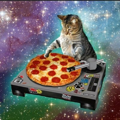 pizzacat@queer.party